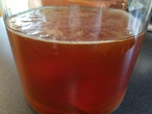 Healthy SCOBY forming
